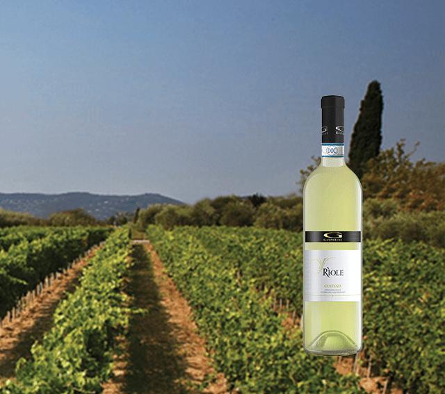Consorzio tutela vino Custoza